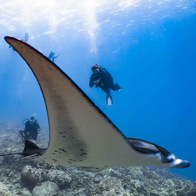 Scuba-Diving-Hawaii-Kona-Honu-Divers-4