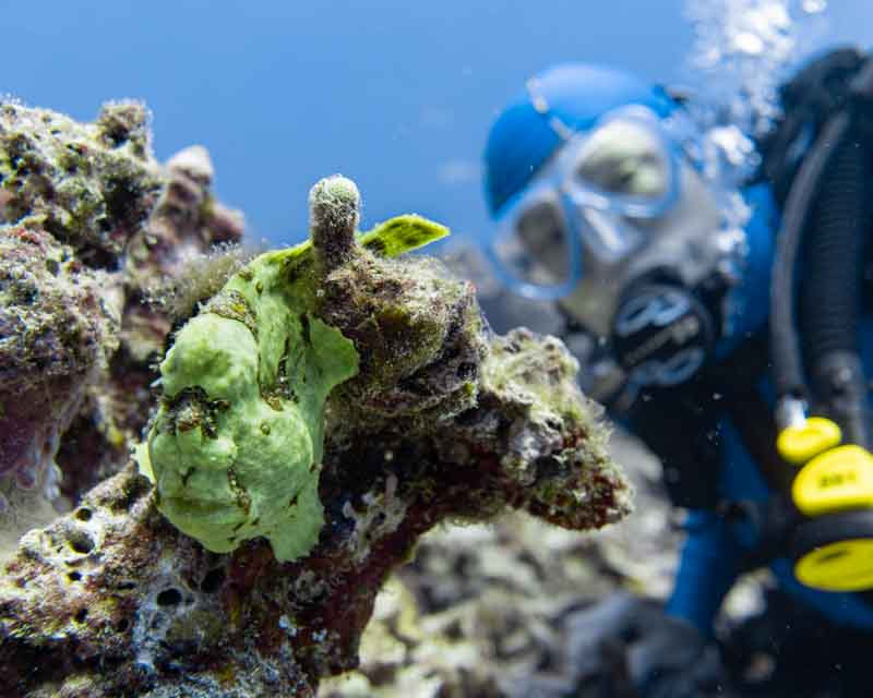 Scuba-Diving-Hawaii-Kona-Honu-Divers-6