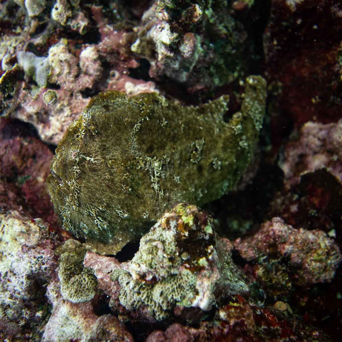 Scuba-Diving-Hawaii-Kona-Honu-Divers-3