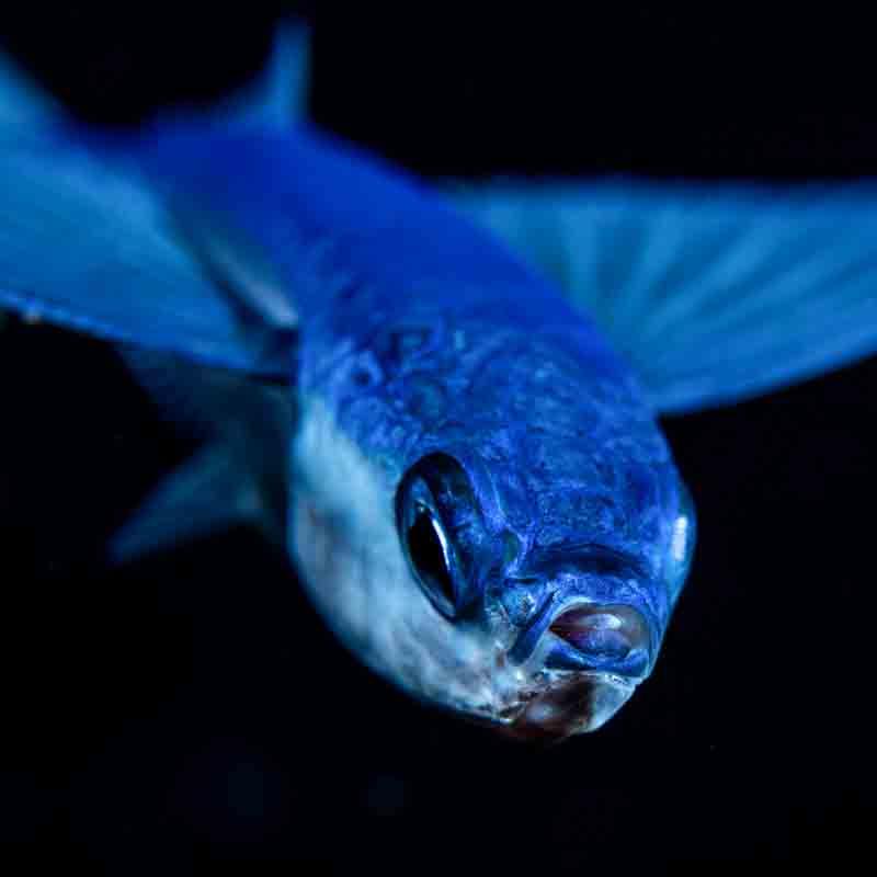 Blackwater-Dive-Kona-Honu-Divers-3