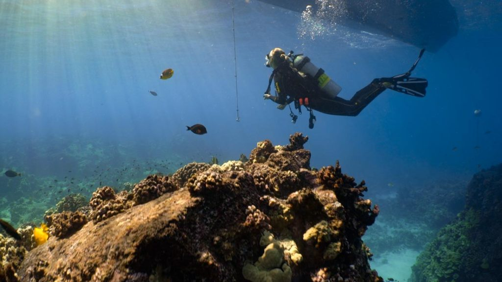 Scuba Diving Hawaii with Kona Honu Divers 22