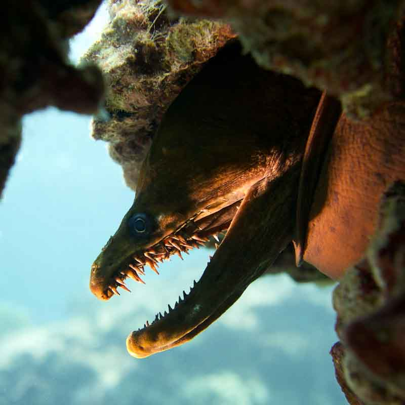 Scuba-Diving-Hawaii-Kona-Honu-Divers-10
