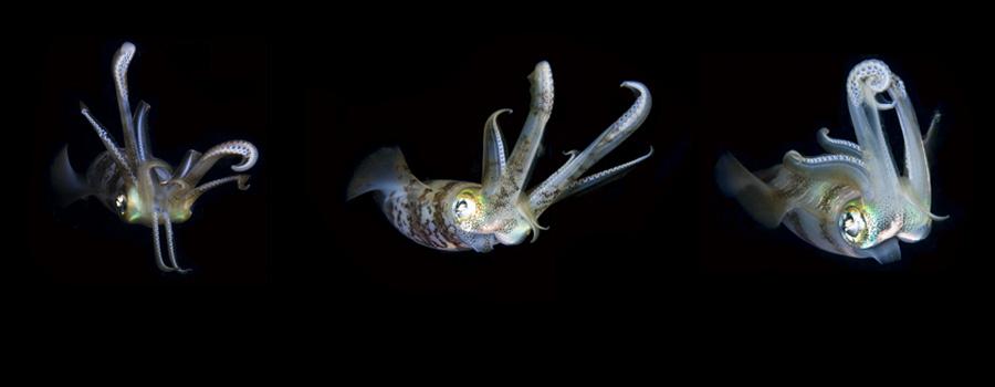 Scuba Dive Travel Trip Palau | Kona Honu Divers 2