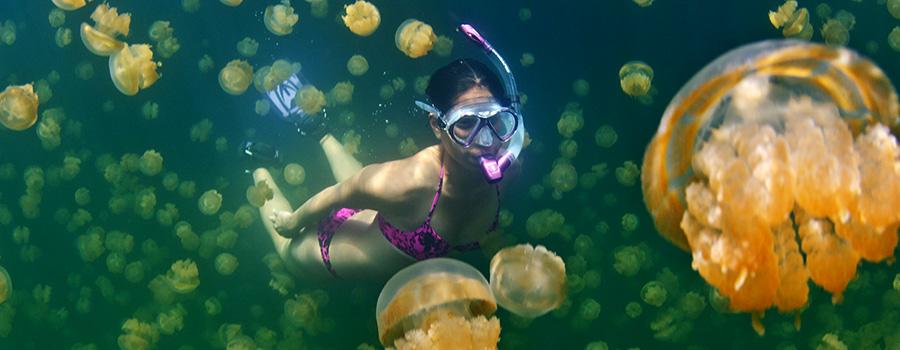 Scuba Dive Travel Trip Palau | Kona Honu Divers 1