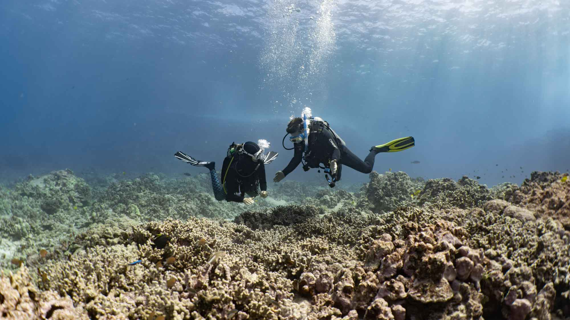 Scuba-Diving-Hawaii-Kona-Honu-Divers-12