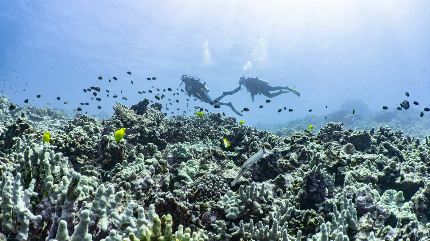 Scuba-Diving-Hawaii-Kona-Honu-Divers-22