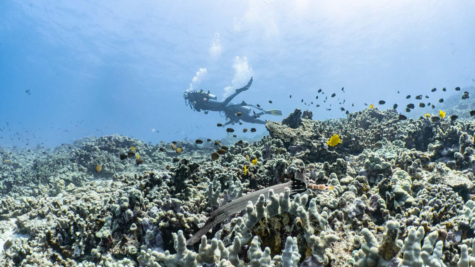 Scuba-Diving-Hawaii-Kona-Honu-Divers-14