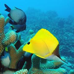 Scuba-Diving-Hawaii-Kona-Honu-Divers-77