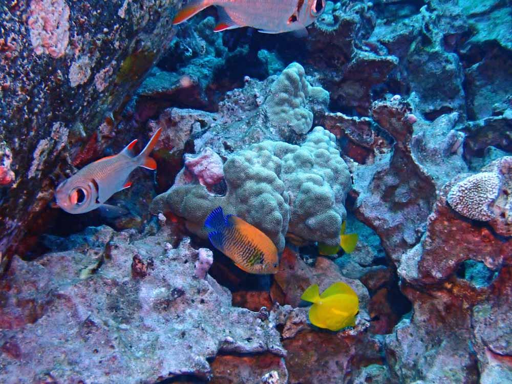 Scuba-Diving-Hawaii-Kona-Honu-Divers-34