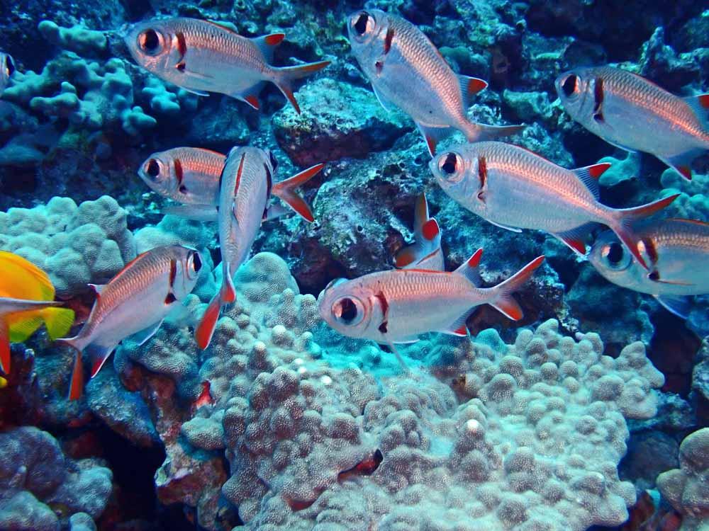 Scuba-Diving-Hawaii-Kona-Honu-Divers-25