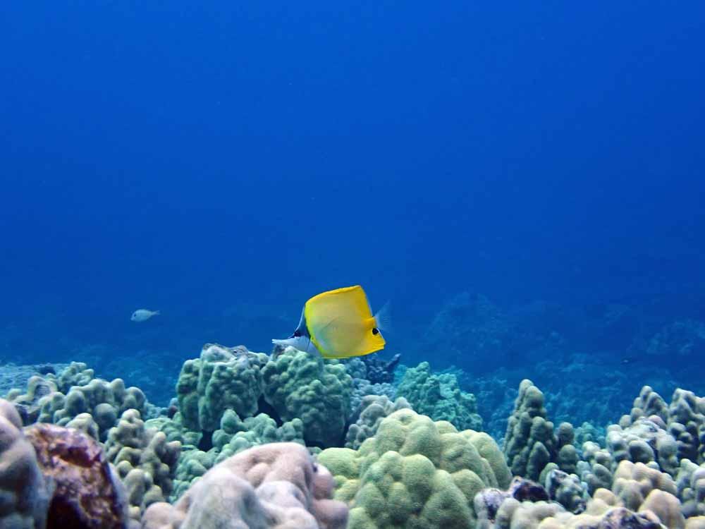 Scuba-Diving-Hawaii-Kona-Honu-Divers-42