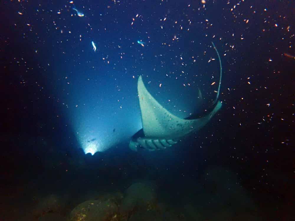 Scuba-Diving-Hawaii-Kona-Honu-Divers-54