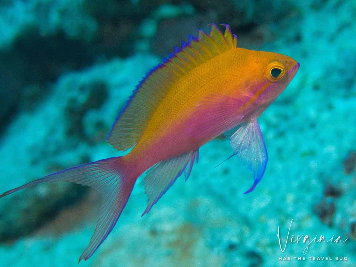 Scuba-Diving-Hawaii-|-Kona-Honu-Divers-84