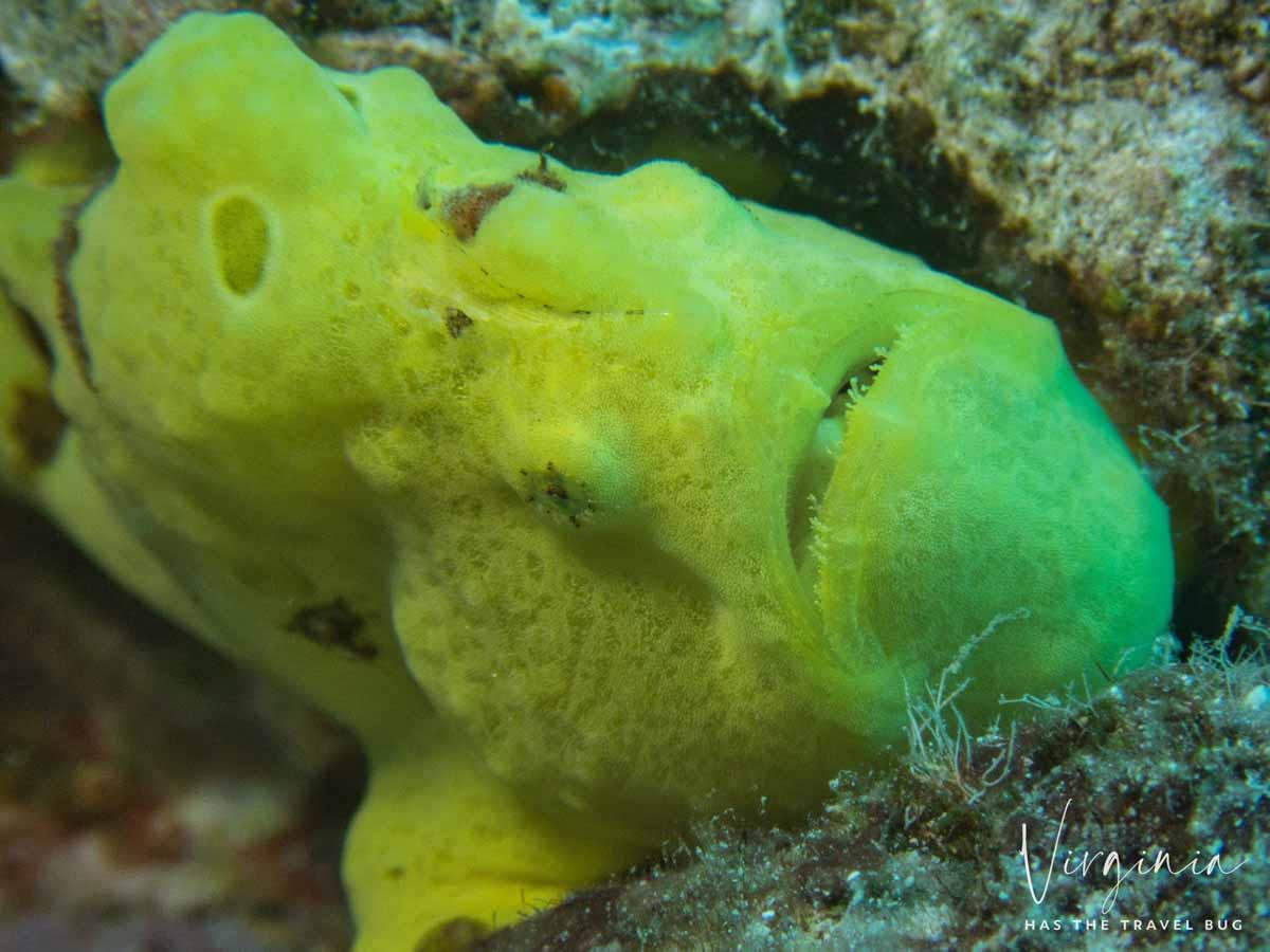Scuba-Diving-Hawaii-|-Kona-Honu-Divers-96