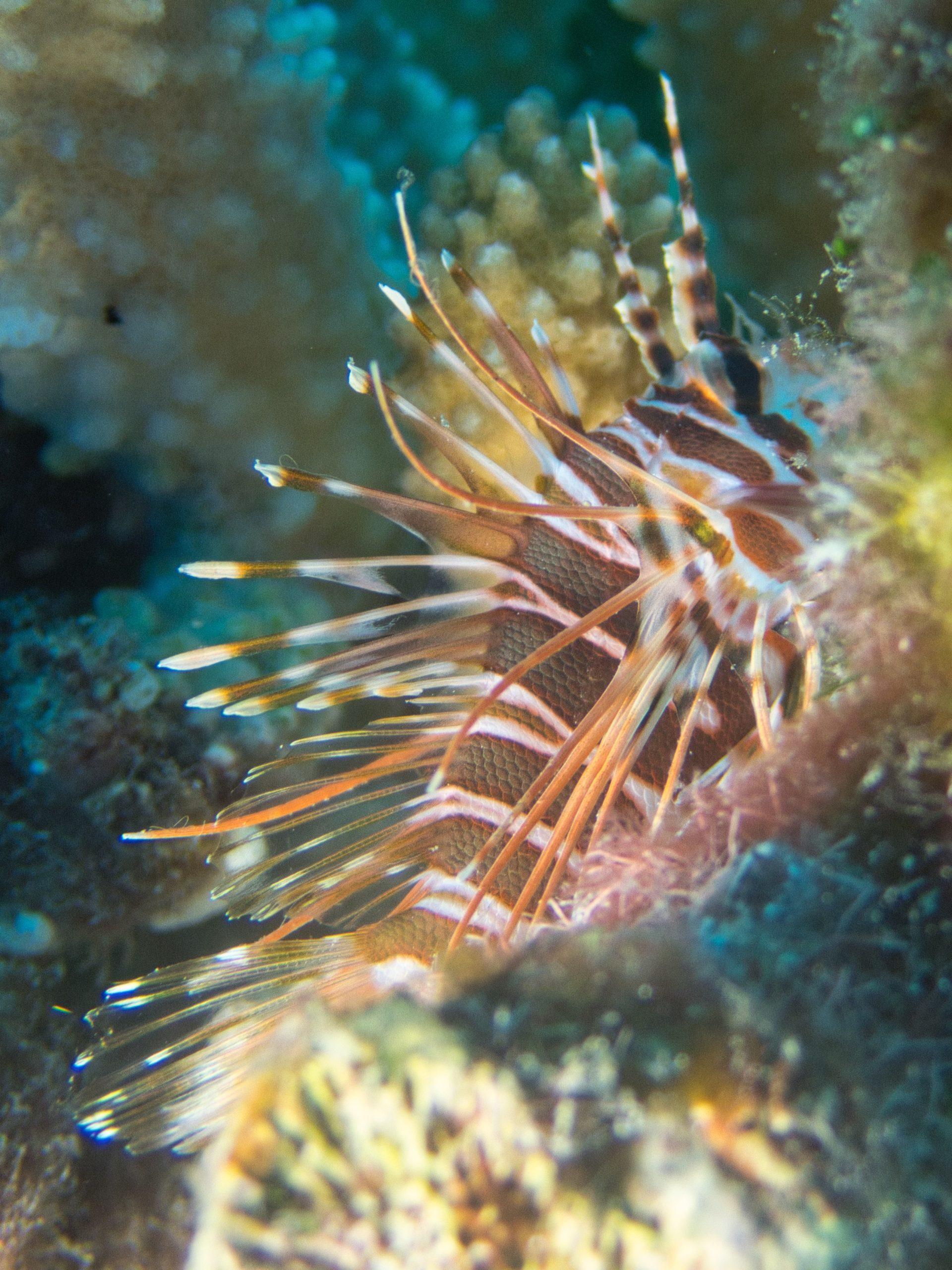Scuba-Diving-Hawaii-|-Kona-Honu-Divers-80