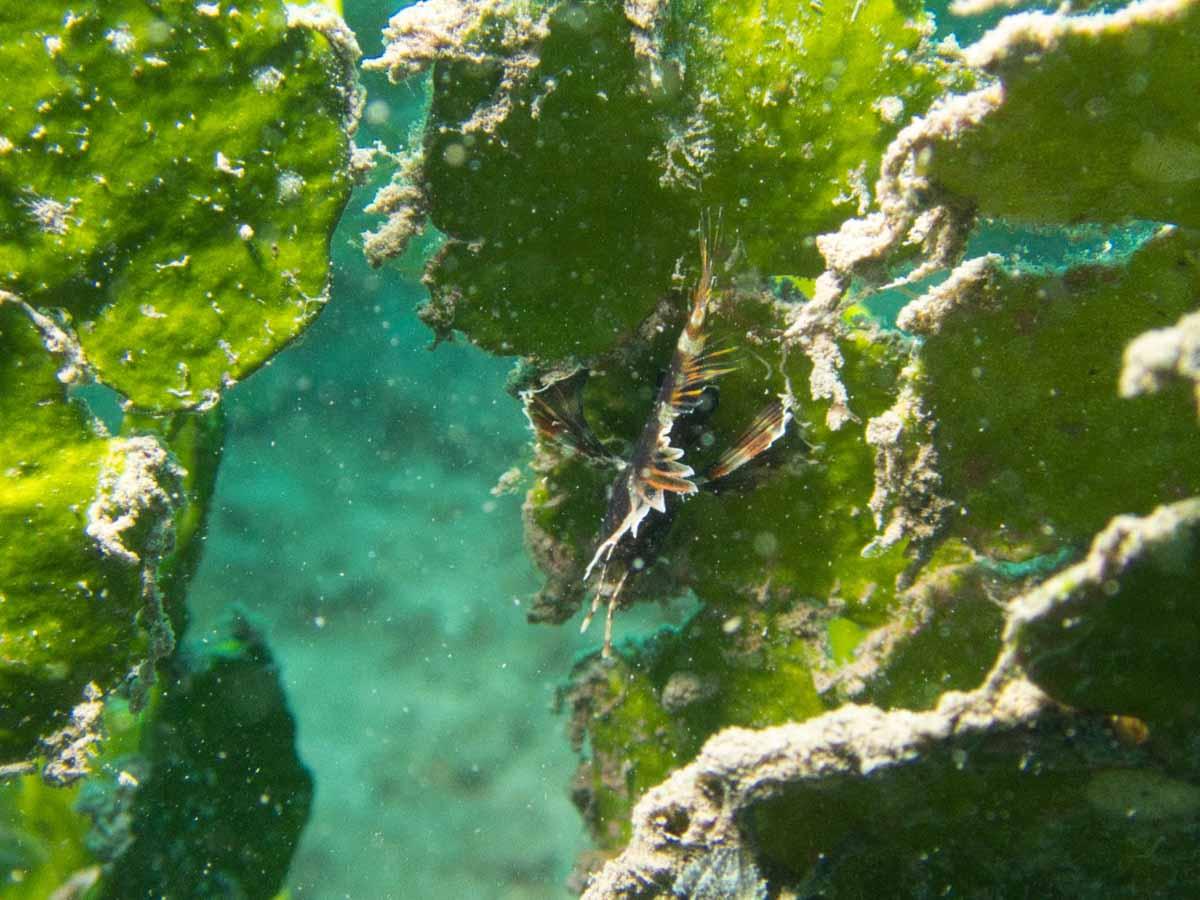 Scuba-Diving-Hawaii-|-Kona-Honu-Divers-99