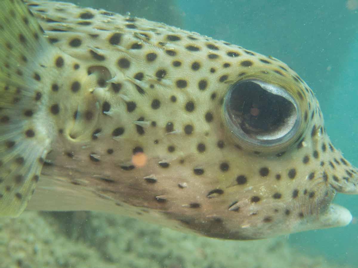 Scuba-Diving-Hawaii-|-Kona-Honu-Divers-101