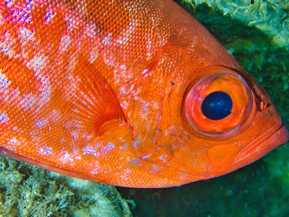 Scuba-Diving-Hawaii-|-Kona-Honu-Divers-104
