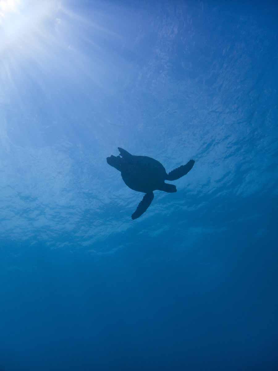 Scuba-Diving-Hawaii-|-Kona-Honu-Divers-105