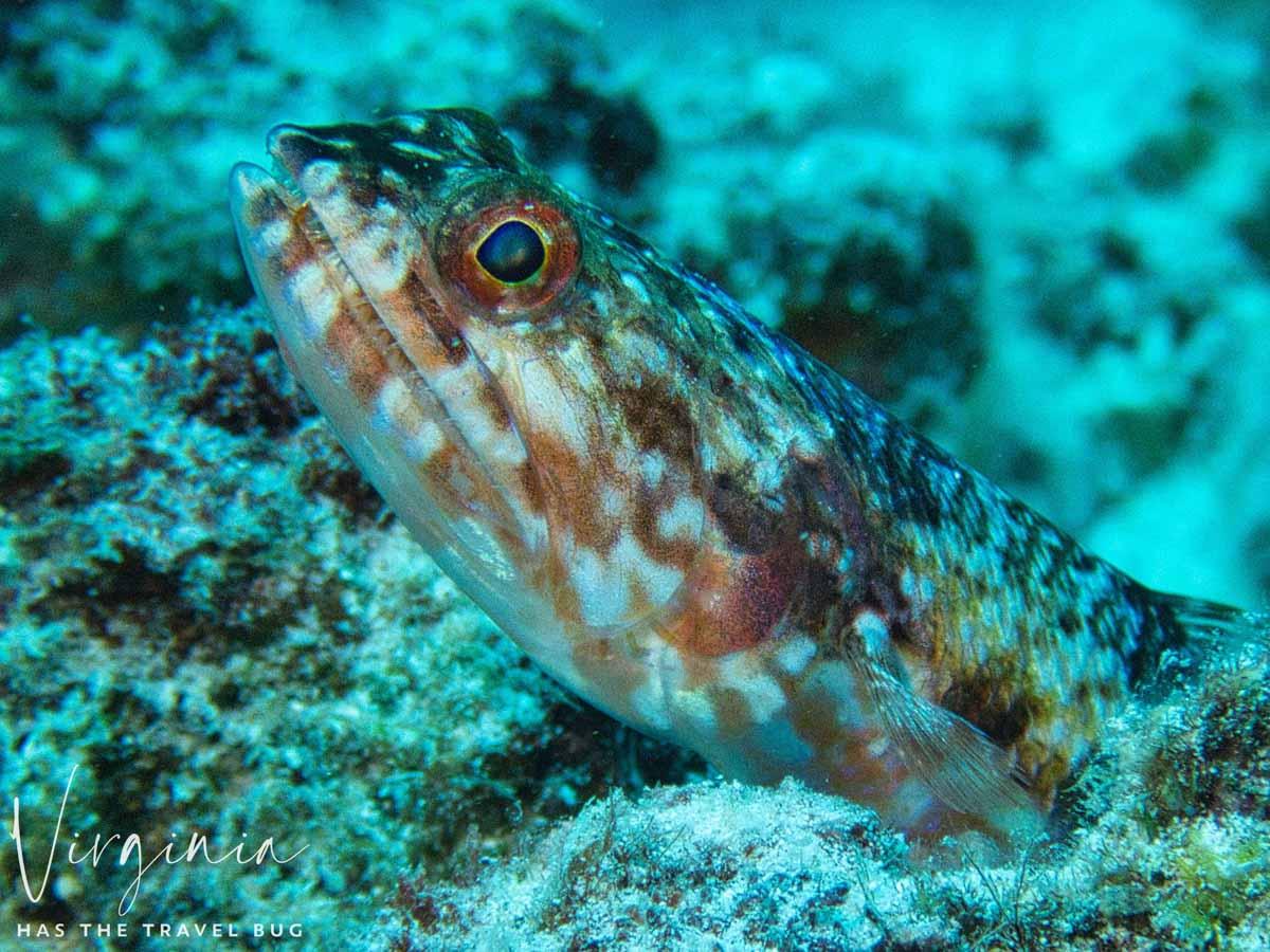 Scuba-Diving-Hawaii-|-Kona-Honu-Divers-107