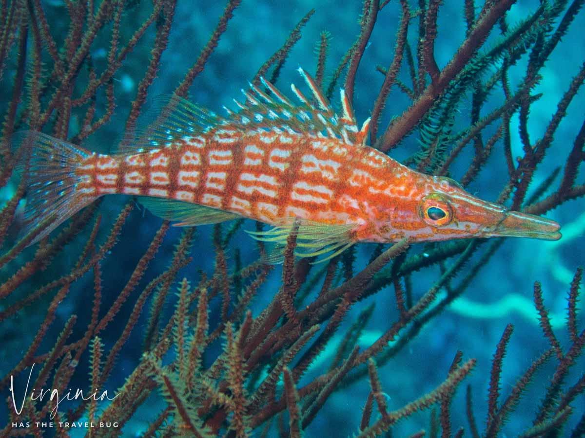 Scuba-Diving-Hawaii-|-Kona-Honu-Divers-108