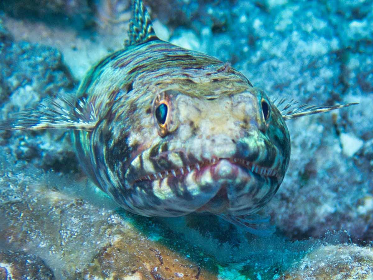 Scuba-Diving-Hawaii-|-Kona-Honu-Divers-127
