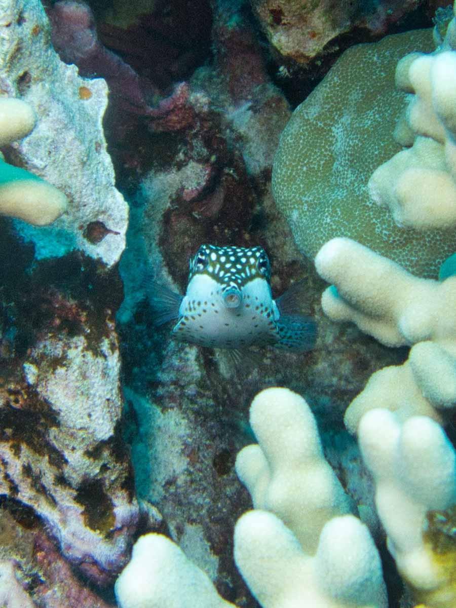Scuba-Diving-Hawaii-|-Kona-Honu-Divers-125