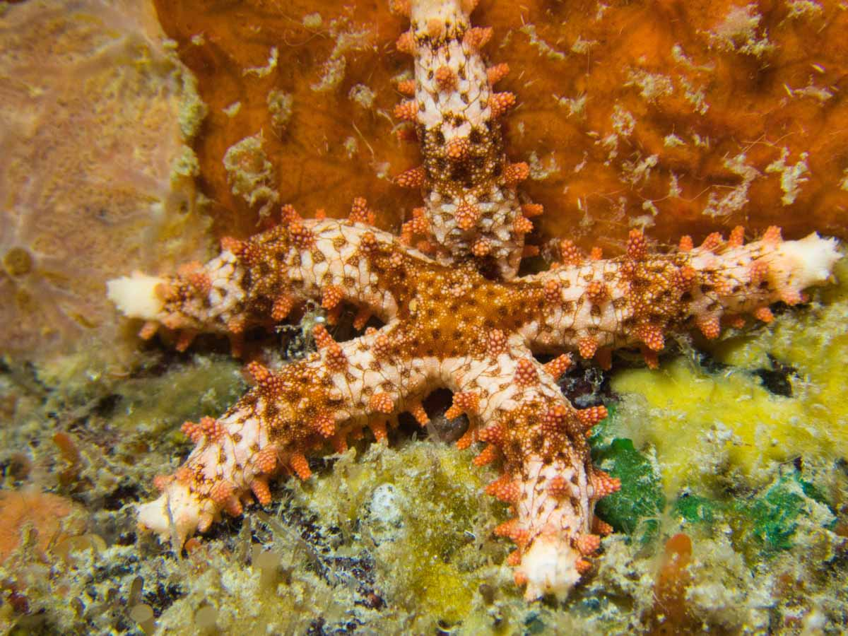 Scuba-Diving-Hawaii-|-Kona-Honu-Divers-126