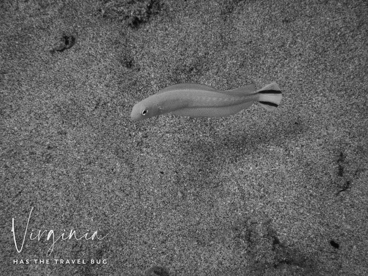 Scuba-Diving-Hawaii-|-Kona-Honu-Divers-131