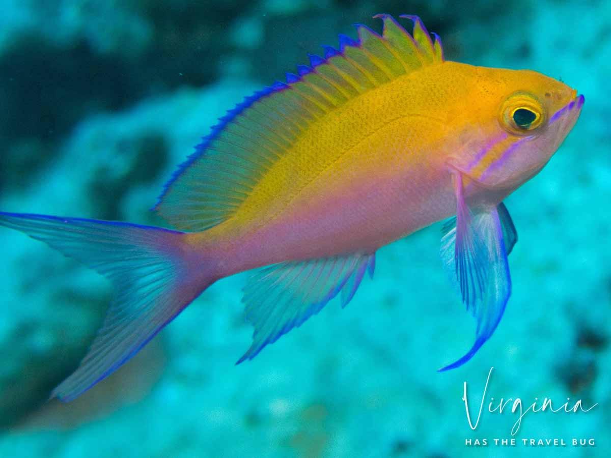 Scuba-Diving-Hawaii-|-Kona-Honu-Divers-83