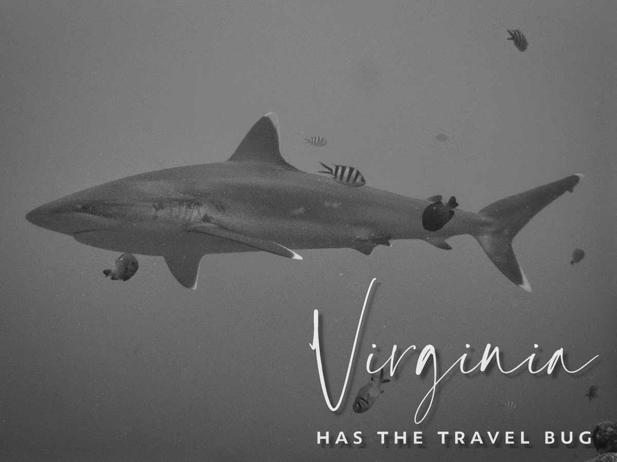 Scuba-Diving-Hawaii-|-Kona-Honu-Divers-129